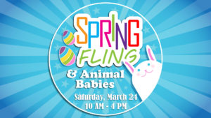 Spring Fling & Animal Babies graphic