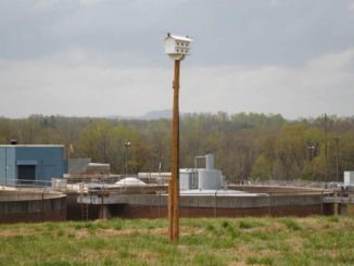 Purple martin condo on pole in front of wastewater treatment plant