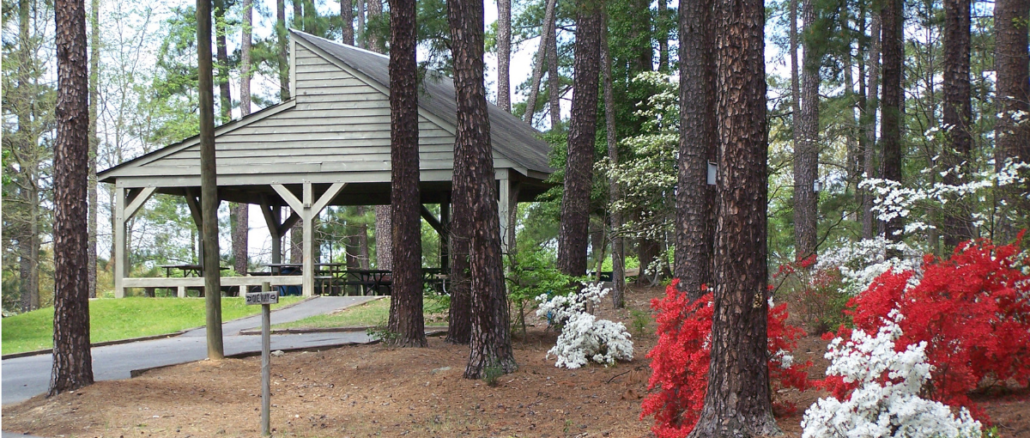 Trees, blooming azaleas and picnic shelter