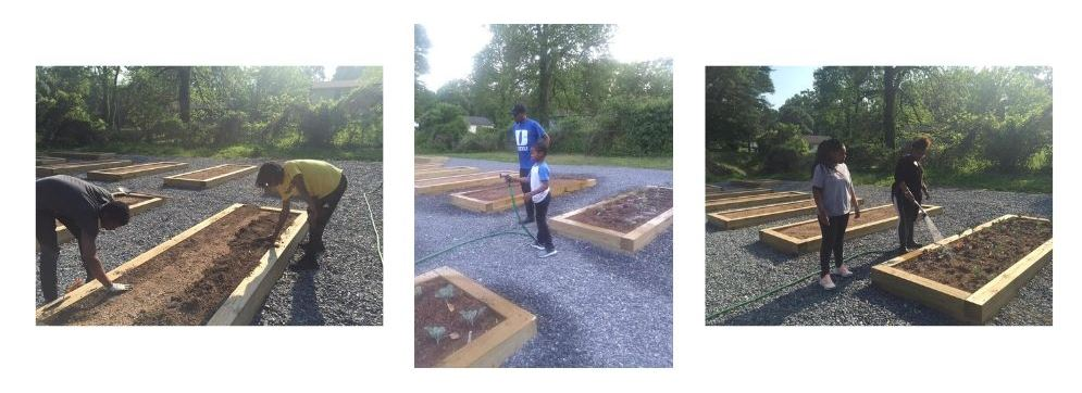 Three photos of young people preparing garden beds for planting