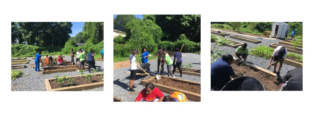 Three photos of young people shoveling soil and planting