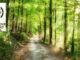 Path through wooded area with Carolina Thread Trail logo