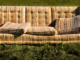Old couch with cushion askew sitting in grass
