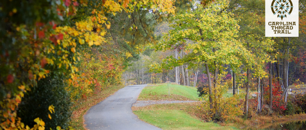 Asphalt walking path surrounded by trees